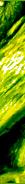 Почему кричат петухи - Куры - Птицеводство - Каталог статей